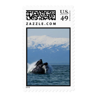 Cabeza de la ballena jorobada envio