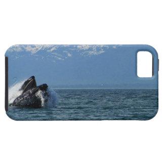 Cabeza de la ballena jorobada iPhone 5 carcasa