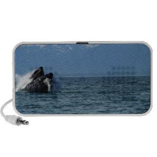 Cabeza de la ballena jorobada laptop altavoz