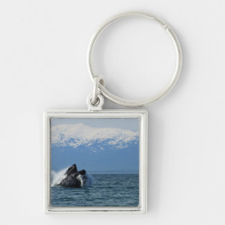 Cabeza de la ballena jorobada llavero cuadrado plateado