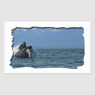 Cabeza de la ballena jorobada pegatina rectangular