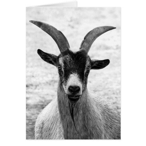 Cabeza de la cabra felicitaciones