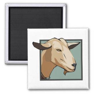 Cabeza de la cabra imán cuadrado