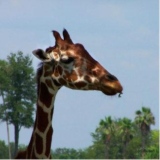 Cabeza de la jirafa contra imagen de la fotografía esculturas fotograficas