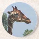 Cabeza de la jirafa contra imagen de la fotografía posavasos diseño