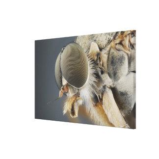 Cabeza de la mosca del atacar desde un escondite impresiones en lona