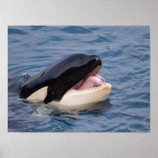 Cabeza de la orca póster
