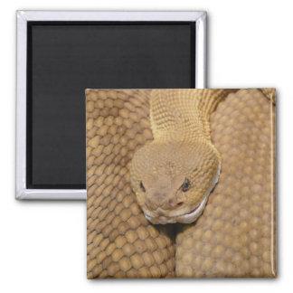 Cabeza de la serpiente de cascabel imán cuadrado