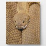Cabeza de la serpiente de cascabel placas con foto