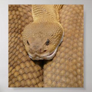 Cabeza de la serpiente de cascabel póster