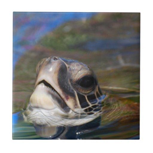 Cabeza de la tortuga azulejo ceramica