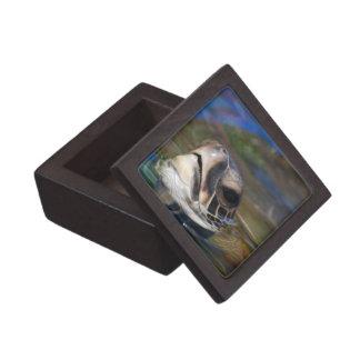 Cabeza de la tortuga cajas de joyas de calidad