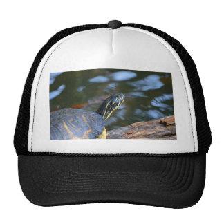 cabeza de la tortuga del agua del resbalador fuera gorra