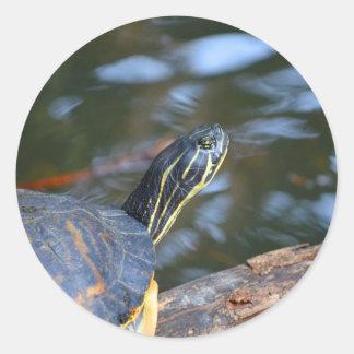 cabeza de la tortuga del agua del resbalador fuera etiqueta redonda