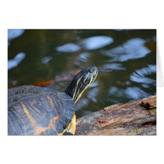 cabeza de la tortuga del agua del resbalador fuera tarjeta pequeña