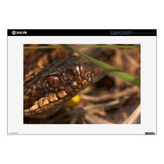 """Cabeza de las serpientes 15"""" para la piel de la PC Portátil Calcomanías"""