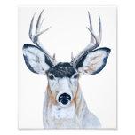 Cabeza de los ciervos en lápiz impresiones fotograficas
