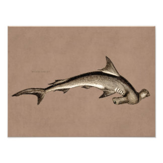 Cabeza de martillo del tiburón de Hammerhead de lo Cojinete