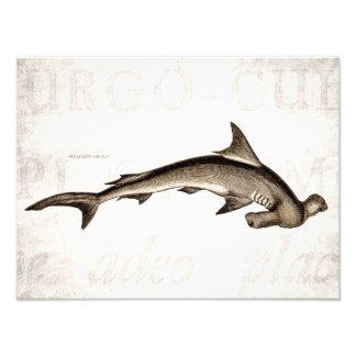 Cabeza de martillo del tiburón de Hammerhead de lo Impresiones Fotográficas