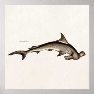 Cabeza de martillo del tiburón de Hammerhead de Póster