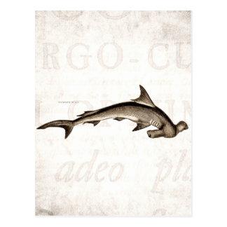 Cabeza de martillo del tiburón de Hammerhead de Tarjetas Postales