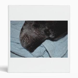 cabeza de perro negro en mascota animal canino de