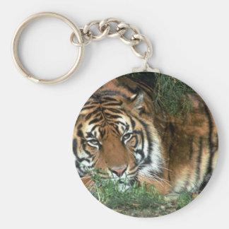 Cabeza de reclinación del tigre en la pata delante llaveros personalizados