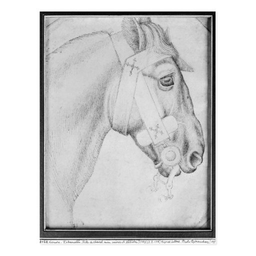 Cabeza de un caballo, el álbum de Vallardi Postales