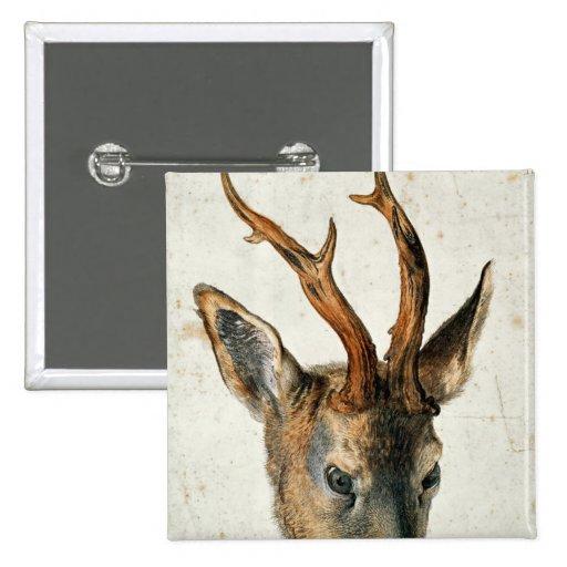 Cabeza de un ciervo de huevas pin cuadrado