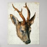Cabeza de un ciervo de huevas póster