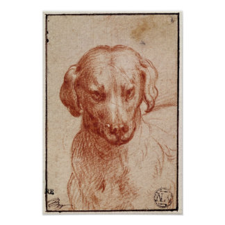 Cabeza de un perro póster