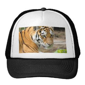 Cabeza de un tigre gorras de camionero