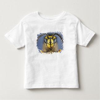 Cabeza de una avispa común playera de bebé