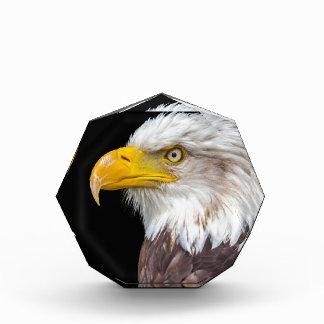 Cabeza del águila calva en negro