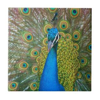 Cabeza del azul de pavo real con y plumas de cola azulejo cuadrado pequeño
