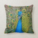 Cabeza del azul de pavo real con y plumas de cola almohadas