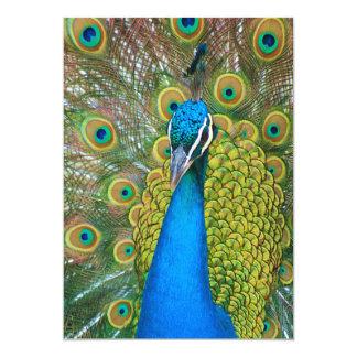 Cabeza del azul de pavo real con y plumas de cola invitación 12,7 x 17,8 cm