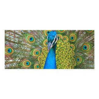 Cabeza del azul de pavo real con y plumas de cola comunicado