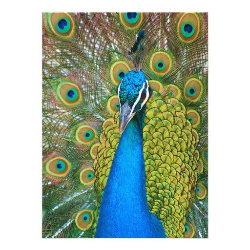 Cabeza del azul de pavo real con y plumas de cola  invitación