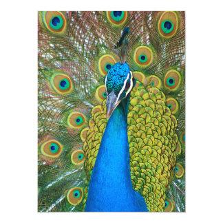 Cabeza del azul de pavo real con y plumas de cola invitación 13,9 x 19,0 cm
