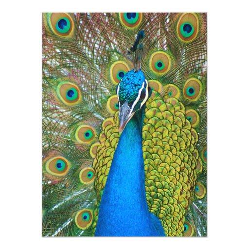"""Cabeza del azul de pavo real con y plumas de cola invitación 5.5"""" x 7.5"""""""