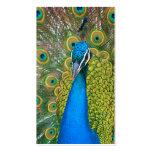 Cabeza del azul de pavo real con y plumas de cola plantilla de tarjeta de negocio