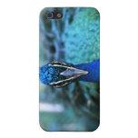 Cabeza del azul de pavo real en imagen iPhone 5 coberturas