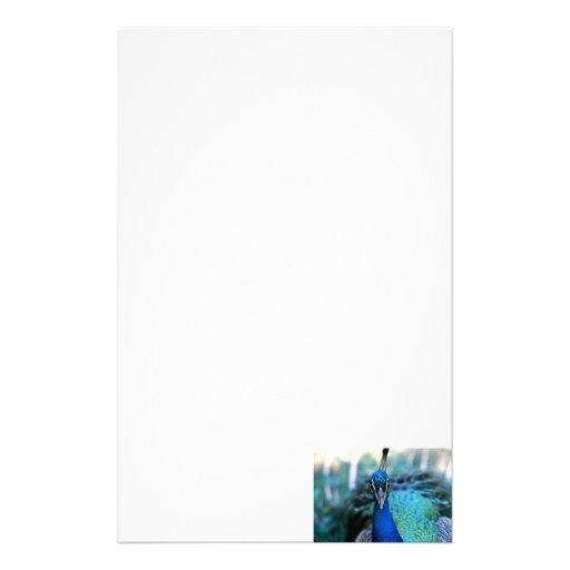 Cabeza del azul de pavo real en imagen papeleria de diseño