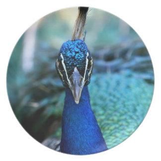 Cabeza del azul de pavo real en imagen plato de comida