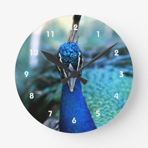 Cabeza del azul de pavo real en imagen reloj redondo mediano