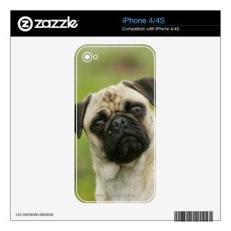 Cabeza del barro amasado amontonada mirando la cám skins para eliPhone 4