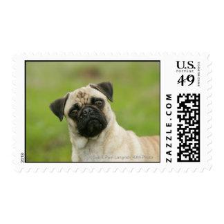 Cabeza del barro amasado amontonada mirando la timbre postal