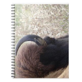 Cabeza del bisonte que se acuesta libretas espirales