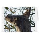 Cabeza del burro tarjeton